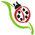 blt_ladybug-7384298